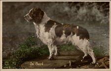 Spring Spaniel? Sog On Guard Tinted Real Photo Postcard c1920