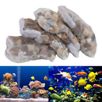 Sandstone Aquarium Filter Material Nitrifying Bacterial House Water Cleaning 50g