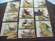 ORIGINAL VINTAGE VICTORIAN CHILD'S BIRD PUZZLES SET OF TEN