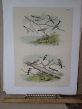 Vintage Print,HUMMINGBIRDS #2,Pl 100,Birds North America,Studer,1888