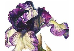 Iris Purple Flower Painting Nature Fine Canvas Print A4