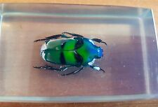 Vintage Colorful Beetle (Unknown Species) Specimen in Perspex Holder Colorful