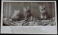 OLD POSTCARD OF CATS / KITTENS ROTARY PHOTO E.C 8413