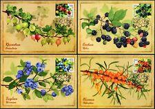 Russia-2021. Flora of Russia. Berries. 4 Maximum Cards