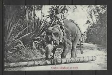 E7945 Ceylon Postcard elephant at work  wild animals cultures ethnics