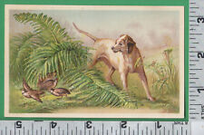 C554 Quail dog amid the ferns with quail flock game bird embossed trade card