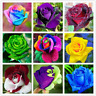 200 PCS Seeds Rare Rose Bonsai Colorful Flowers Plants Special Rainbow Garden N