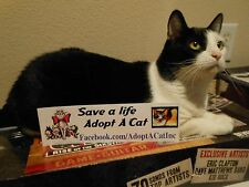 Save a Life Adopt A Cat bumper sticker decal for No Kill Shelter Charity Auction