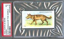 1922 Adkin & Sons DINGO Wild Animals of the World Trade Card PSA 5