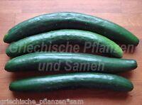 🔥 🥒 Gurken Chinesische Schlange tolle Salat-Gurke 5 frische Samen Balkon Kübel