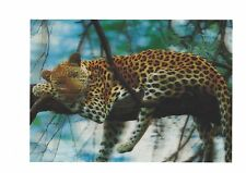 leopard on tree photo 3D Lenticular Holographic Stereoscopic Picture Wall Art