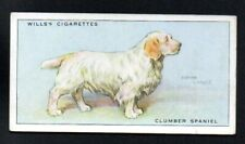 Clumber Spaniel 1937 Wills Cigarettes Tobacco Dogs Series #32 Vgex No Creases