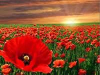 NATURE LANDSCAPE POPPY FIELD SUN RISE RED FLOWER BEAUTIFUL POSTER PRINT BB1477B