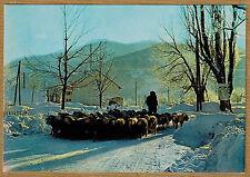Cpsm / Cpm Les Alpes - retour au bercail transhumance des moutons wn0532