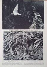 Black Birds Original Art Prints