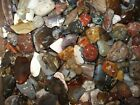 Polished Rock 1 lb lot Polish Agate Natural Tumbled Bulk Lot Gift Collection