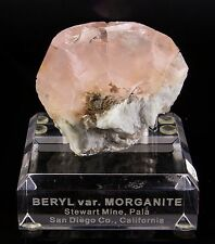 Large Pink Morganite Beryl Crystal on Matrix from the Stewart Mine California!