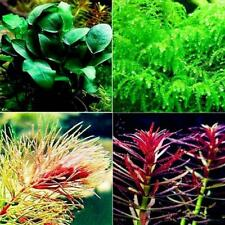 500Pcs Aquarium Plants Seeds Live Grass Water Aquatic Decoration Home Exotic