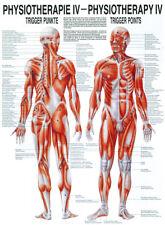 Rüdiger Anatomie Triggerpunkte Poster 24cm x 34cm NEU & OVP