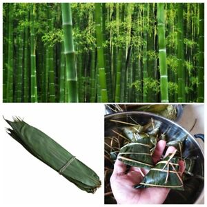 Pure Natural Clean Dried Bamboo Leaves for Zongzi Sticky Rice Dumpling 500 Leave