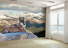 Wolf Lying on Rocks Wallpaper Mural Photo 17346861 budget paper