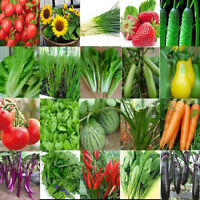 Heirloom Vegetable Fruit Seed Garden Decor Plant Non-GMO Seeds Organic Survival