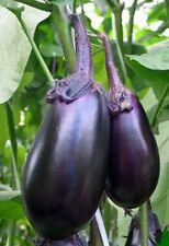 Russian Black Eggplant - SOLOMON - 20 Heirloom Organic Vegetable Aubergine Seeds
