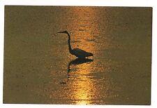 Lone Egret At Sunset Waterfowl Water Bird Barrier Islands Virginia Va Postcard