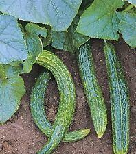 Vegetable Seeds 50 Seeds Suyo Long Cucumber Seeds