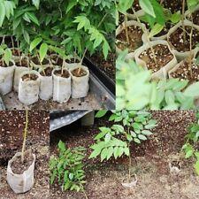 100pcs Degradable Non-woven Nursery Bags Seedling-raising Pot Gardening Supplies