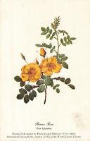Postcard Briar Rose