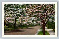 Atlanta GA, Dogwood Trees In Bloom, Linen Georgia Postcard