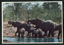 Posted C1970s View of Elephants in Water, South African Game Park
