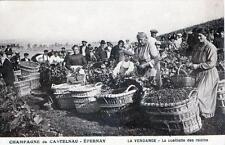 CPA 51 EPERNAY CHAMPAGNE DE CASTELNAU LA VENDANGE LA CUEILLETTE DES RAISINS (GRO