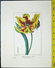 Bessa,Flore des Jardiniers,Tulipa monstrosa altera,handcolored Engraving.ca.1836