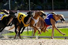 How To Win BIG MONEY At The Greyhound Races - The Complete Set - NOW ON DVDs!!!!