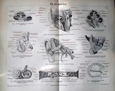 Originaldrucke (1800-1899) mit Arbeitswelt & Technik und Holzschnitt