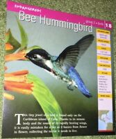 Endangered Species Animal Card - Birds - Bee Hummingbird #18