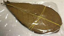 10 Seemandelbaumblätter 15-20cm natürlich gereift+getrocknet TOPQualität