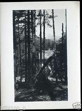 Corse . dans la forêt de Vizzavona . photo ancienne . 1934