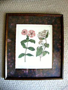 """Vintage Bombay Company Private Col. Botanical Framed & Matted Print 14.5 X 13"""""""