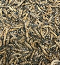 100 Large Superworms