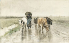 A Herdess with Cows on a Country Road in the Rain 75cm x 47.4cm Canvas Print