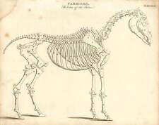 1802  Farriery Skeleton Of The Horse Copperplate