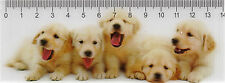 3D - Lineal: fünf niedliche Hunde -Retriever - Welpen - five puppies - chienaux