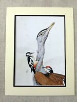 Bird Print Woodpecker Birds Exotic Animals Contemporary American Art Walton Ford
