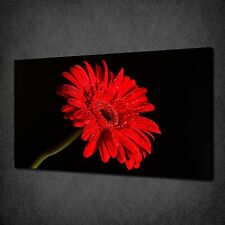STUNNING RED GERBERA FLORAL DESIGN CANVAS PRINT WALL ART PICTURE READY TO HANG