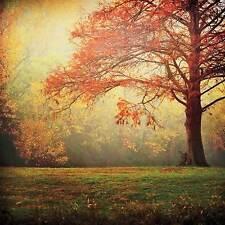 LANDSCAPE ART PRINT - Just Around the Corner by Katya Horner 26x26 Tree Poster
