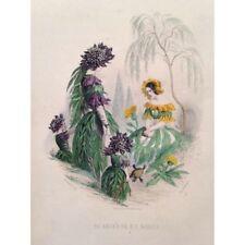 les fleurs animées J.J GRANDVILLE 1848