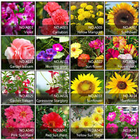 Mixed Style Flower Seeds Home Garden Rare Plants Decoration Multi-Colors CHOOSE